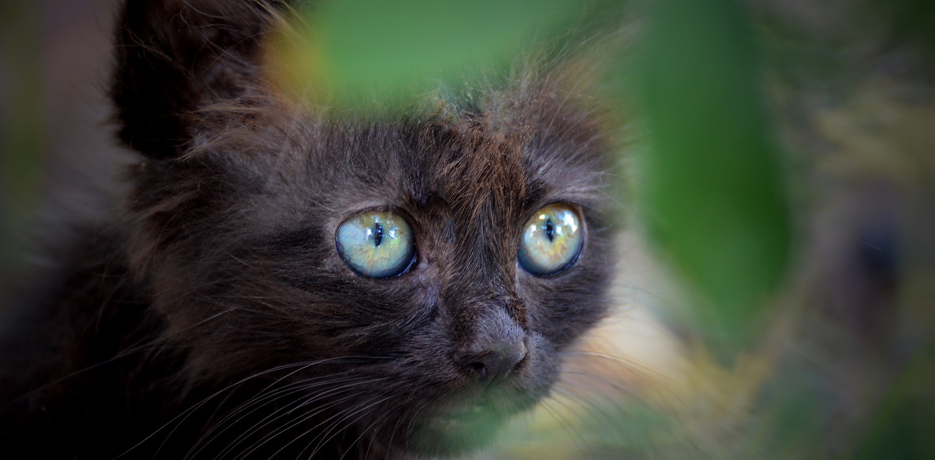 Cat look